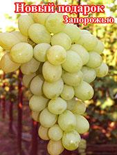 Сорта винограда фото и описание подарок запорожья 425